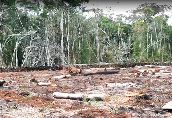 Terreno desmatado em área de proteção ambiental em Ibicoara equivalente a 7 campos de futebol
