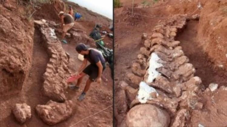 Dinossauro encontrado na Argentina pode ser o maior conhecido